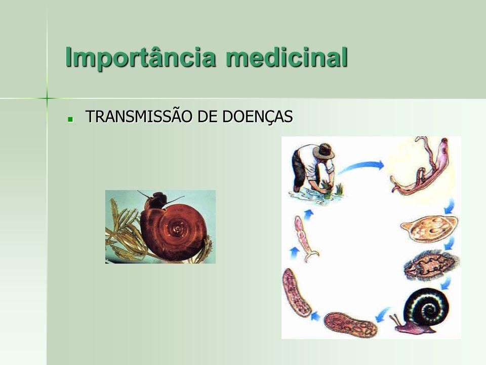 Importância medicinal TRANSMISSÃO DE DOENÇAS TRANSMISSÃO DE DOENÇAS