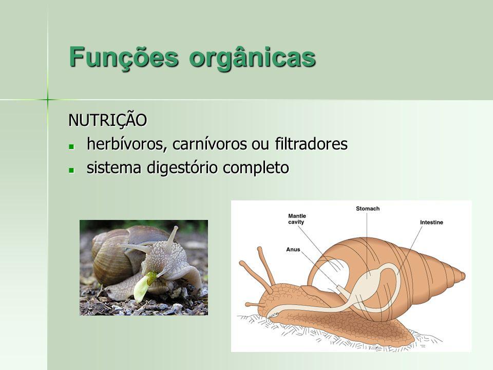 Funções orgânicas NUTRIÇÃO herbívoros, carnívoros ou filtradores herbívoros, carnívoros ou filtradores sistema digestório completo sistema digestório