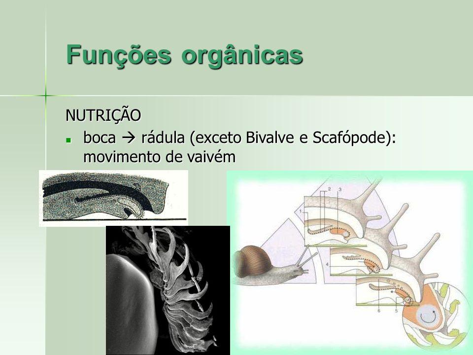 NUTRIÇÃO boca rádula (exceto Bivalve e Scafópode): movimento de vaivém boca rádula (exceto Bivalve e Scafópode): movimento de vaivém