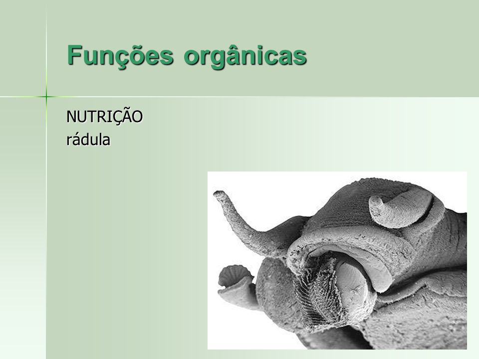 Funções orgânicas NUTRIÇÃOrádula