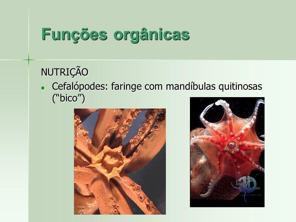 NUTRIÇÃO Cefalópodes: faringe com mandíbulas quitinosas (bico) Cefalópodes: faringe com mandíbulas quitinosas (bico)