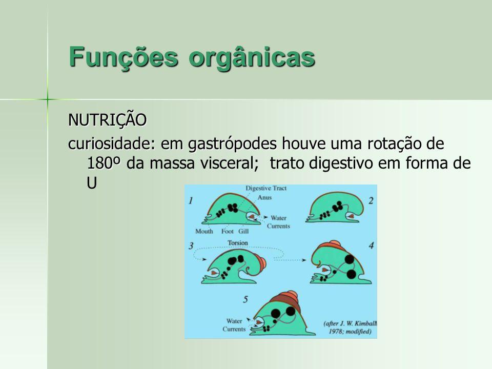 Funções orgânicas NUTRIÇÃO curiosidade: em gastrópodes houve uma rotação de 180º curiosidade: em gastrópodes houve uma rotação de 180º da massa viscer