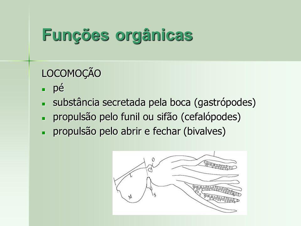 LOCOMOÇÃO pé pé substância secretada pela boca (gastrópodes) substância secretada pela boca (gastrópodes) propulsão pelo funil ou sifão (cefalópodes)