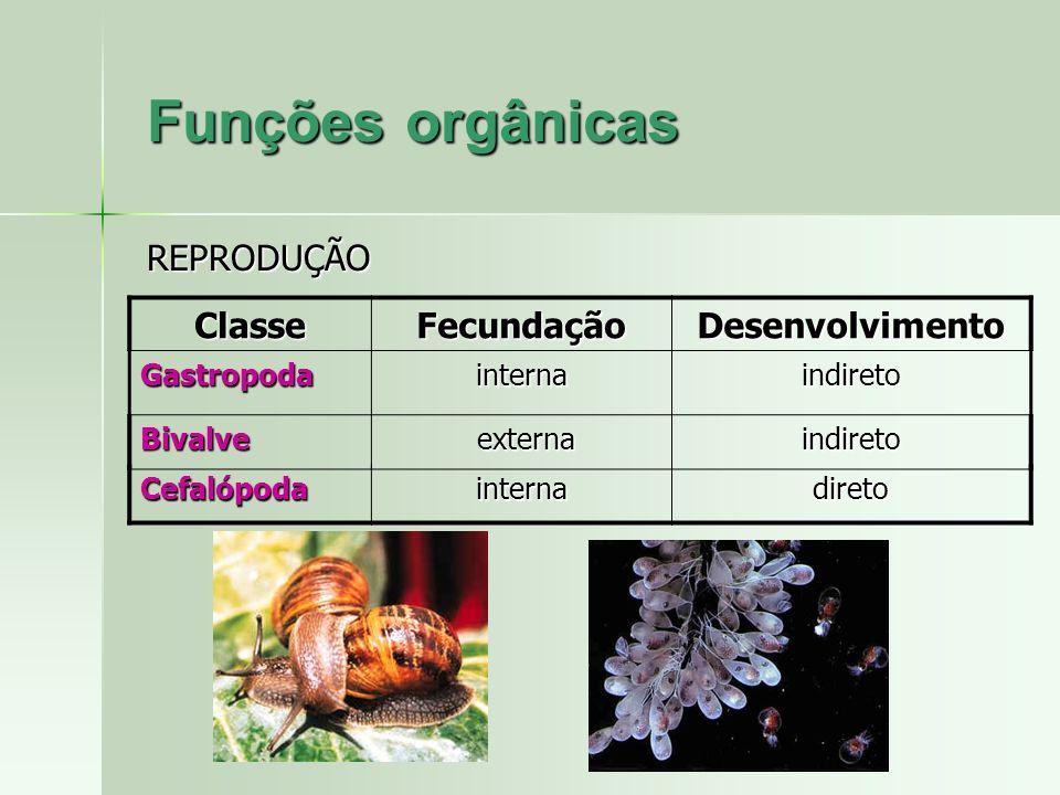 ClasseFecundaçãoDesenvolvimento Gastropodainternaindireto Bivalve externa externaindireto CefalópodainternadiretoREPRODUÇÃO Funções orgânicas