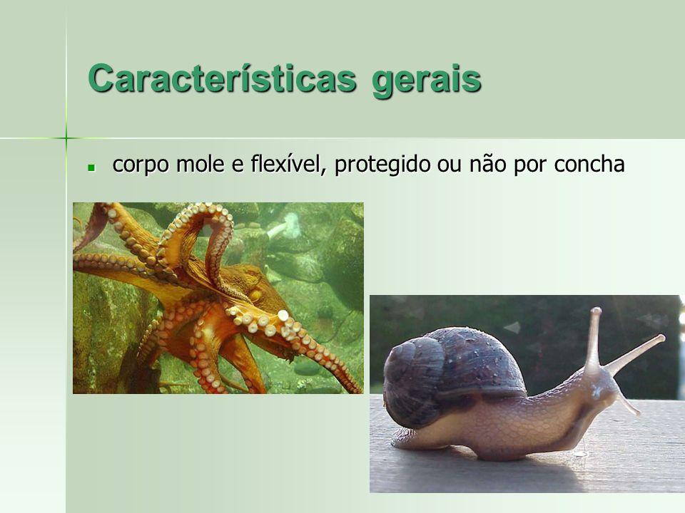 Características gerais corpo mole e flexível, protegido ou não por concha corpo mole e flexível, protegido ou não por concha