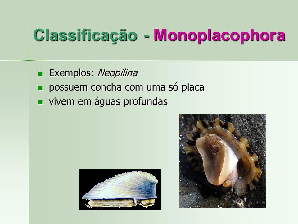 Classificação - Monoplacophora Exemplos: Neopilina Exemplos: Neopilina possuem concha com uma só placa possuem concha com uma só placa vivem em águas