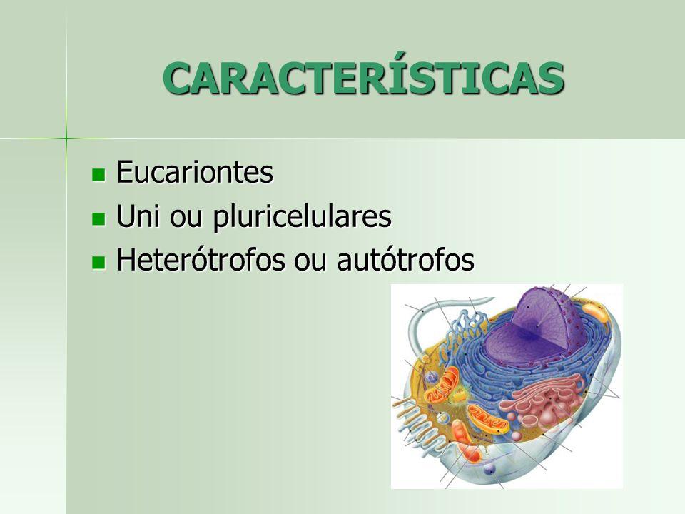 CARACTERÍSTICAS Eucariontes Eucariontes Uni ou pluricelulares Uni ou pluricelulares Heterótrofos ou autótrofos Heterótrofos ou autótrofos