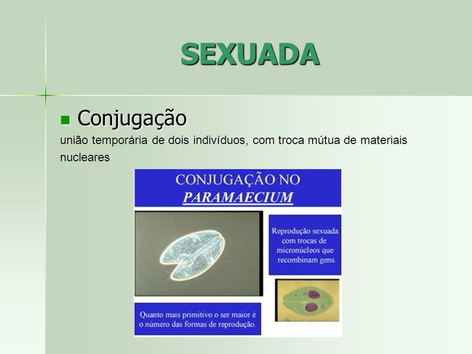 SEXUADA Conjugação Conjugação união temporária de dois indivíduos, com troca mútua de materiais nucleares