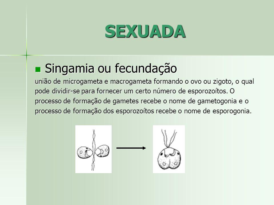 SEXUADA Singamia ou fecundação Singamia ou fecundação união de microgameta e macrogameta formando o ovo ou zigoto, o qual pode dividir-se para fornece