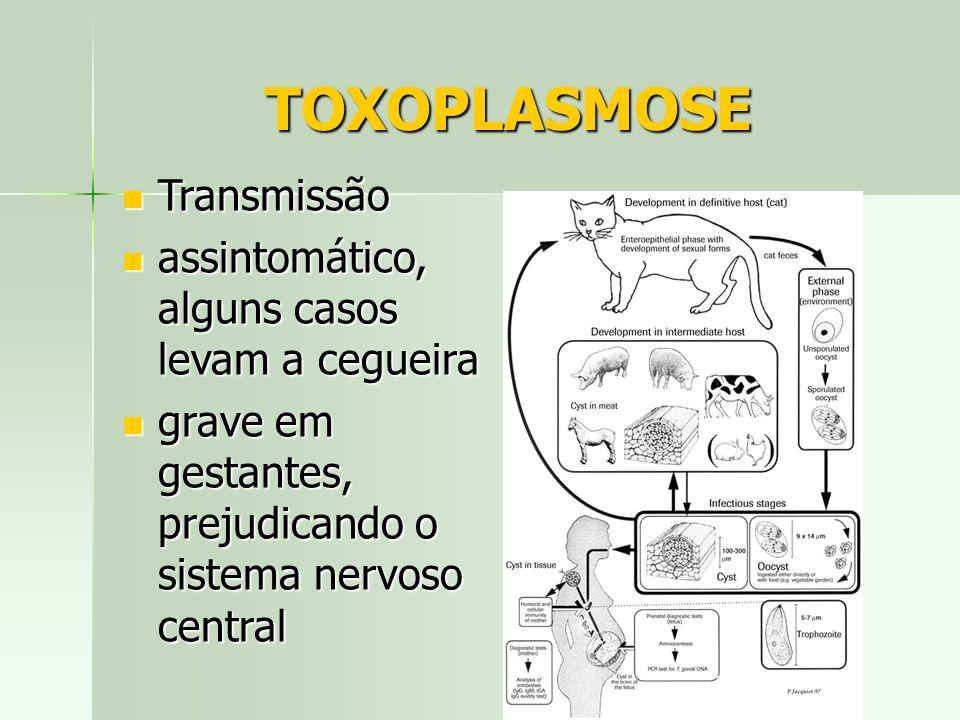 TOXOPLASMOSE Transmissão Transmissão assintomático, alguns casos levam a cegueira assintomático, alguns casos levam a cegueira grave em gestantes, pre
