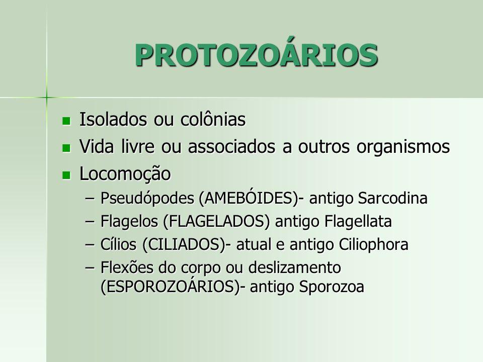 PROTOZOÁRIOS Isolados ou colônias Isolados ou colônias Vida livre ou associados a outros organismos Vida livre ou associados a outros organismos Locom