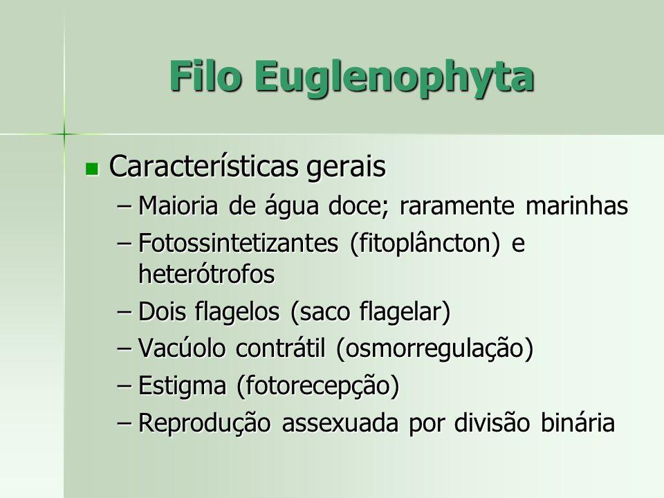 Filo Euglenophyta Características gerais Características gerais –Maioria de água doce; raramente marinhas –Fotossintetizantes (fitoplâncton) e heterót