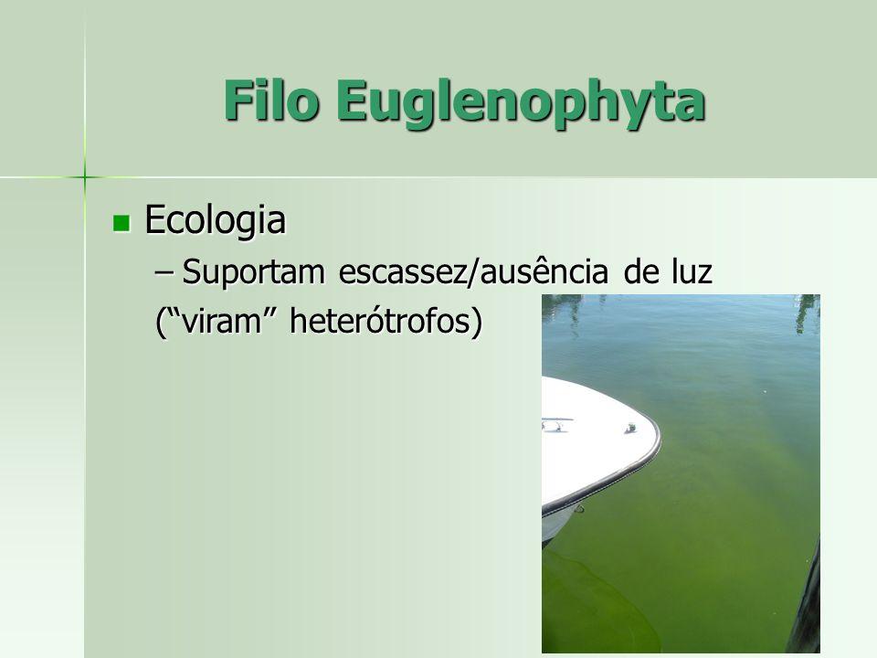 Ecologia Ecologia –Suportam escassez/ausência de luz (viram heterótrofos)