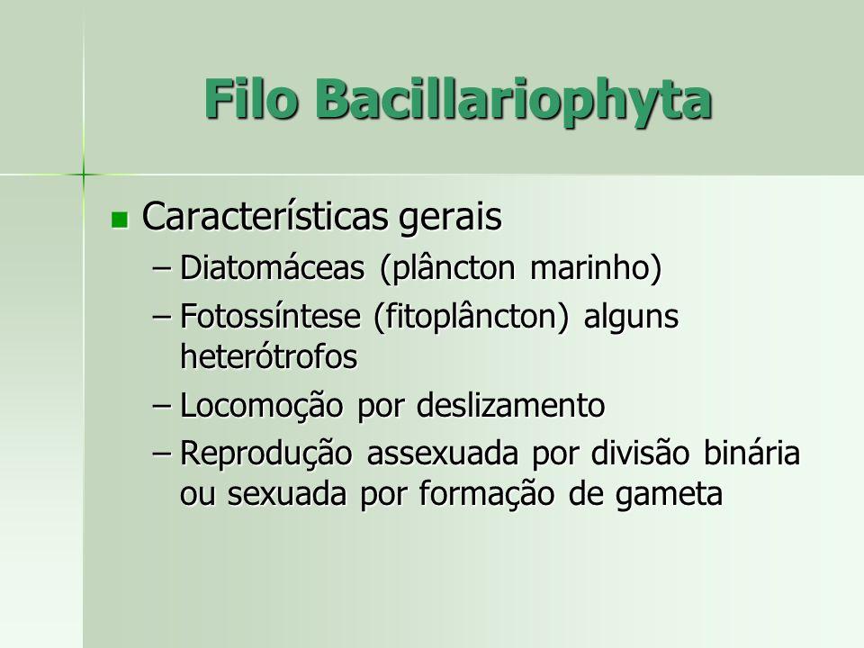 Características gerais Características gerais –Diatomáceas (plâncton marinho) –Fotossíntese (fitoplâncton) alguns heterótrofos –Locomoção por deslizam