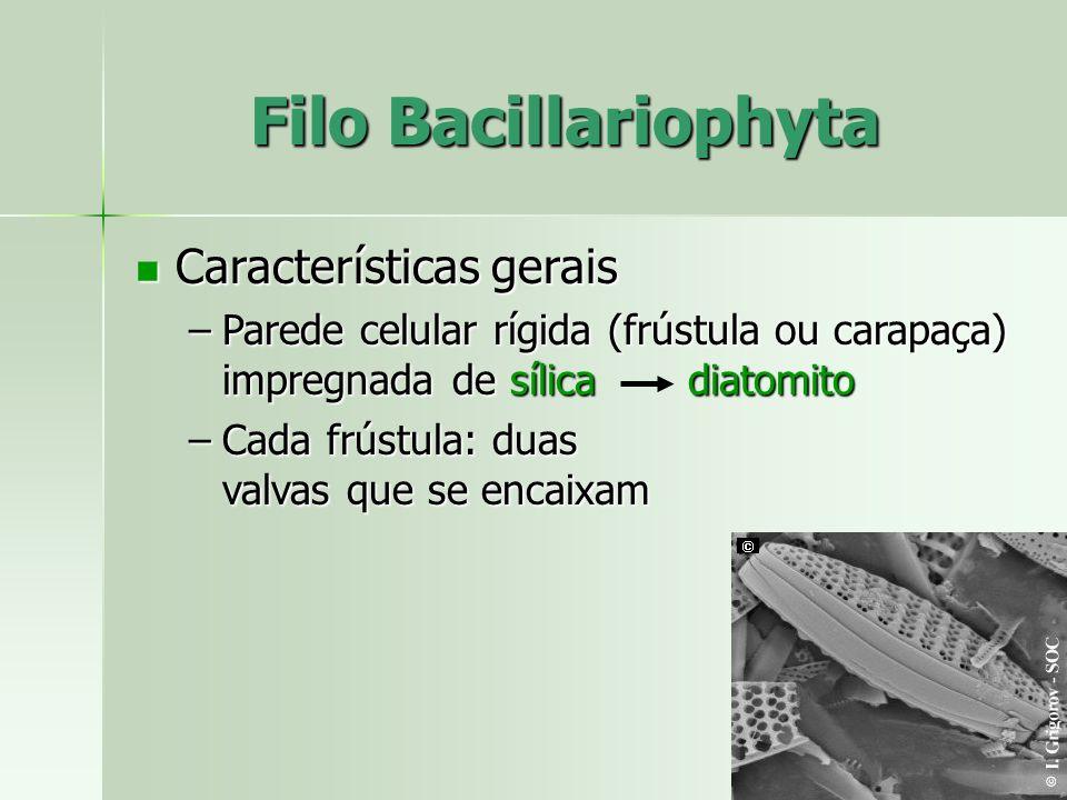 Características gerais Características gerais –Parede celular rígida (frústula ou carapaça) impregnada de sílica diatomito –Cada frústula: duas valvas