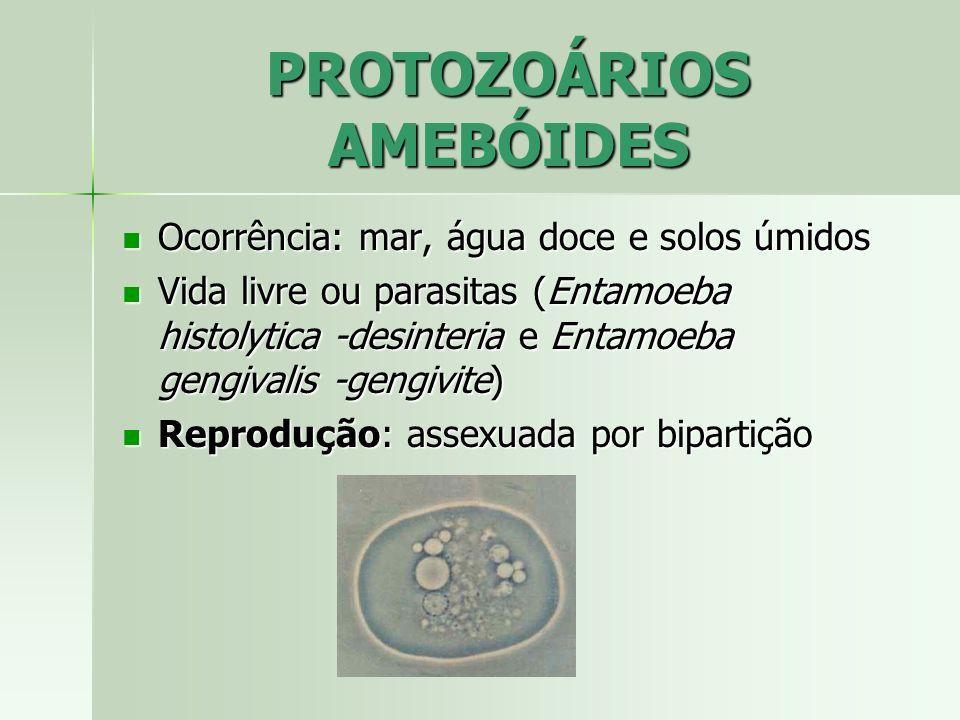 CLASSIFICAÇÃO Filo Euglenophyta (euglenóides) Filo Euglenophyta (euglenóides) Filo Bacillariophyta (diatomáceas) Filo Bacillariophyta (diatomáceas) Filo Dinophyta (dinoflagelados) Filo Dinophyta (dinoflagelados) Filo Phaeophyta (algas pardas) Filo Phaeophyta (algas pardas) Filo Rhodophyta (algas vermelhas) Filo Rhodophyta (algas vermelhas) Filo Chlorophyta (algas verdes) Filo Chlorophyta (algas verdes)