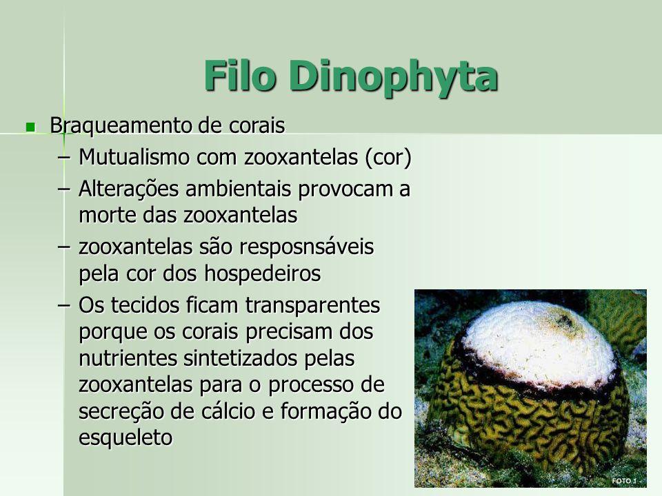 Braqueamento de corais Braqueamento de corais –Mutualismo com zooxantelas (cor) –Alterações ambientais provocam a morte das zooxantelas –zooxantelas s