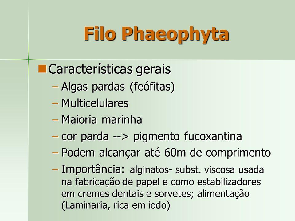 Características gerais Características gerais –Algas pardas (feófitas) –Multicelulares –Maioria marinha –cor parda --> pigmento fucoxantina –Podem alc