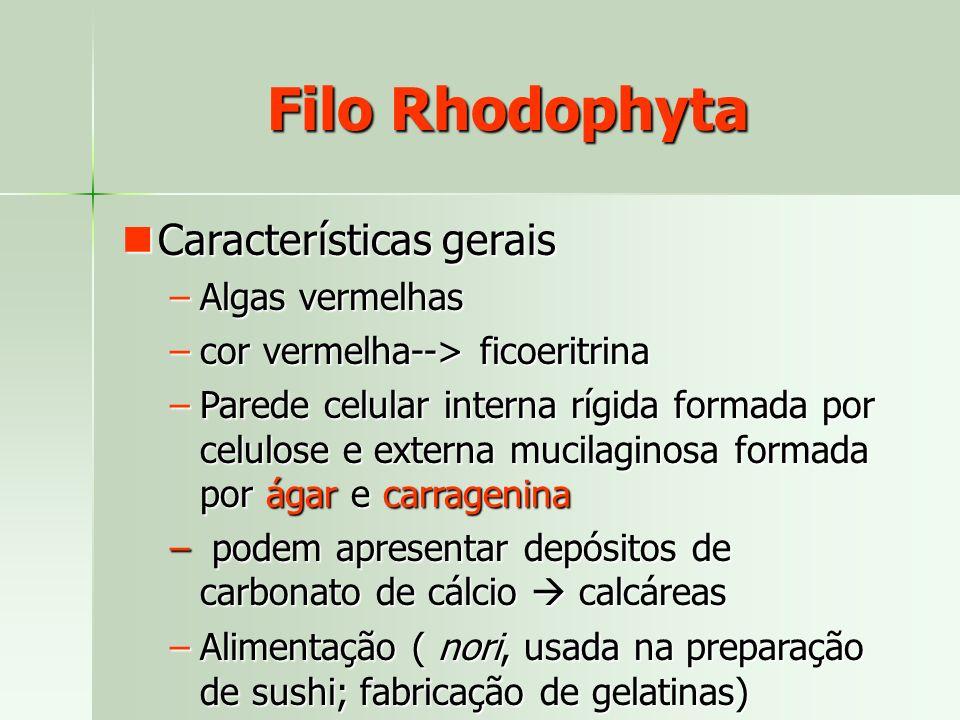 Características gerais Características gerais –Algas vermelhas –cor vermelha--> ficoeritrina –Parede celular interna rígida formada por celulose e ext