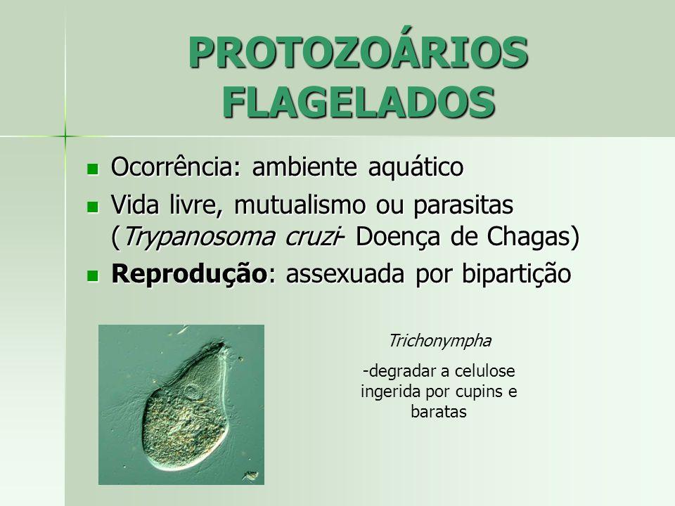 MALÁRIA Protozoário: Plasmodium Protozoário: Plasmodium