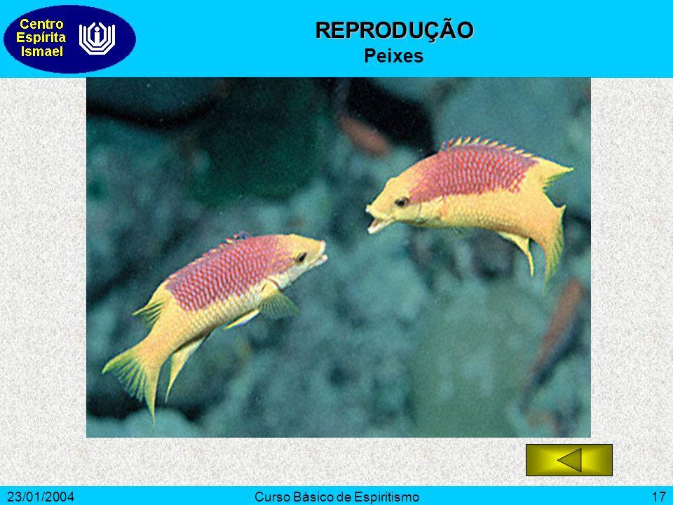 23/01/2004Curso Básico de Espiritismo17 REPRODUÇÃO Peixes