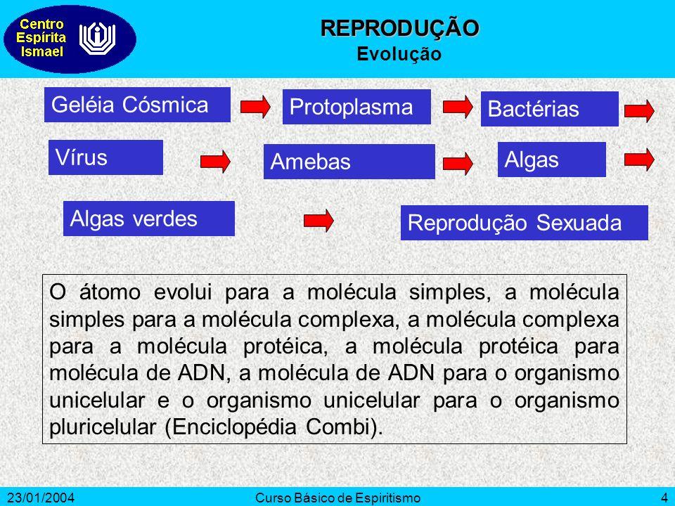 23/01/2004Curso Básico de Espiritismo4 Geléia Cósmica Protoplasma Vírus Bactérias Reprodução Sexuada O átomo evolui para a molécula simples, a molécul