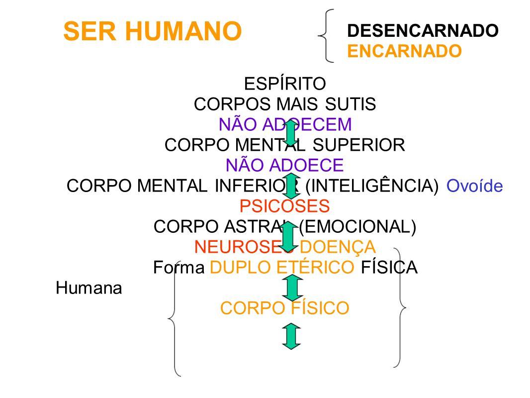 SER HUMANO ESPÍRITO CORPOS MAIS SUTIS NÃO ADOECEM CORPO MENTAL SUPERIOR NÃO ADOECE CORPO MENTAL INFERIOR (INTELIGÊNCIA) Ovoíde PSICOSES CORPO ASTRAL (