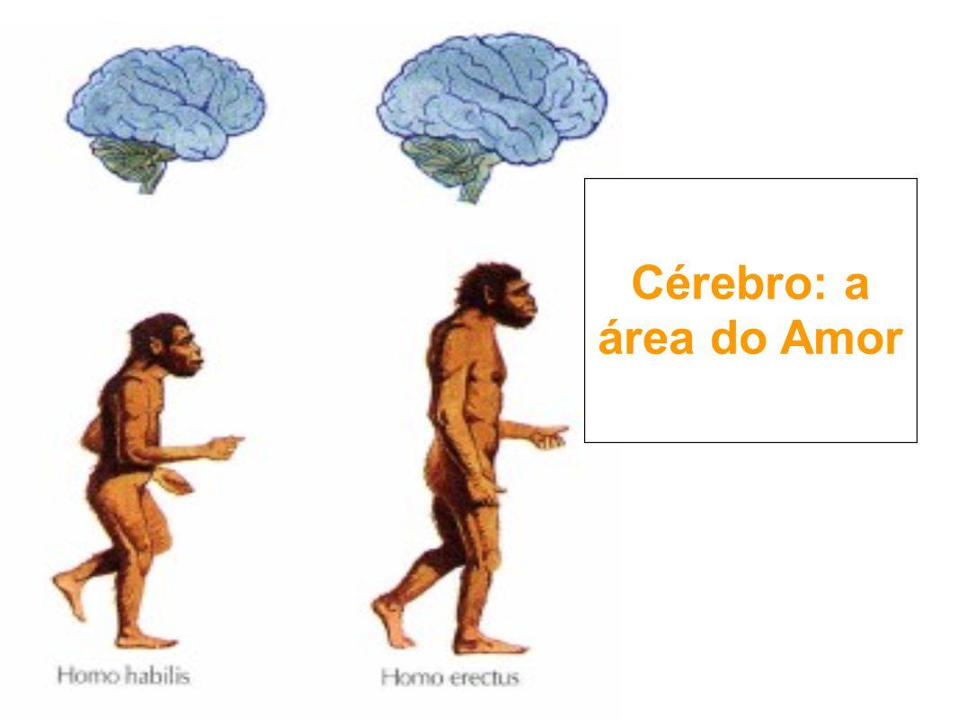 Cérebro: a área do Amor