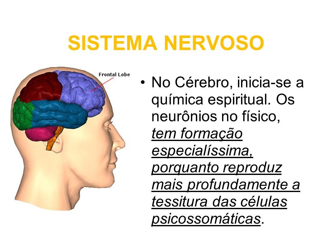 SISTEMA NERVOSO No Cérebro, inicia-se a química espiritual. Os neurônios no físico, tem formação especialíssima, porquanto reproduz mais profundamente