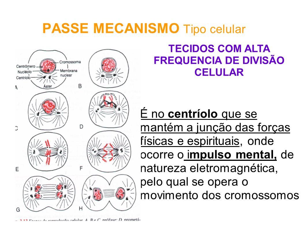 PASSE MECANISMO Tipo celular É no centríolo que se mantém a junção das forças físicas e espirituais, onde ocorre o impulso mental, de natureza eletrom
