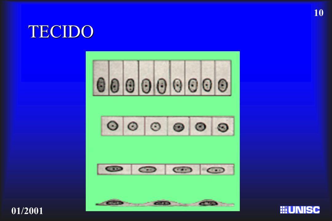 10 01/2001 TECIDO