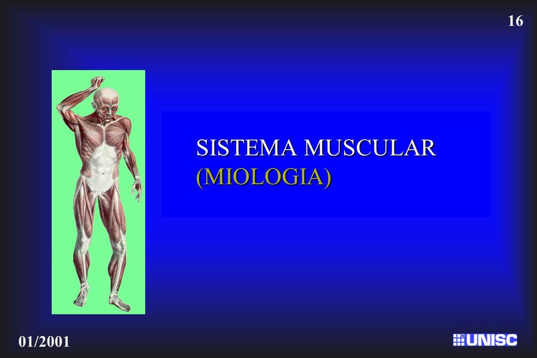 16 01/2001 SISTEMA MUSCULAR (MIOLOGIA)