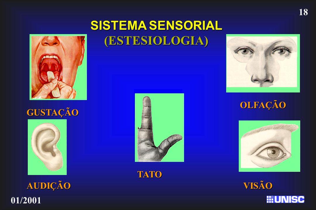 18 01/2001 GUSTAÇÃO OLFAÇÃO AUDIÇÃO VISÃO SISTEMA SENSORIAL (ESTESIOLOGIA) TATO