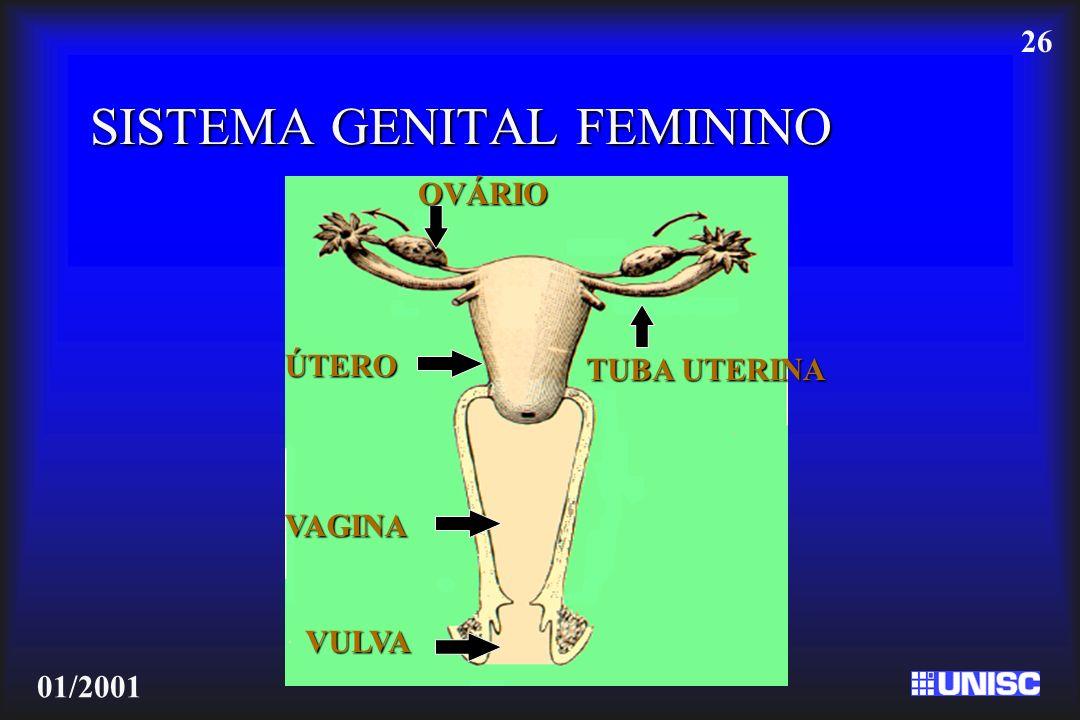 26 01/2001 SISTEMA GENITAL FEMININO TUBA UTERINA OVÁRIO ÚTERO VAGINA VULVA