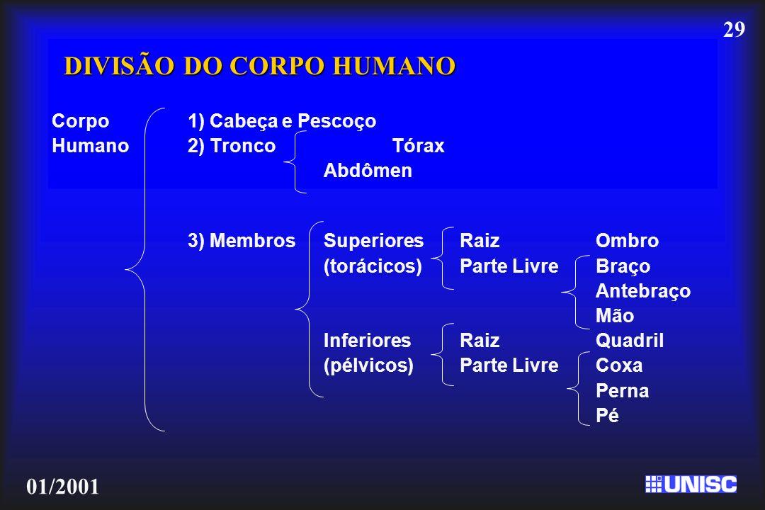 29 01/2001 DIVISÃO DO CORPO HUMANO Corpo 1) Cabeça e Pescoço Humano2) TroncoTórax Abdômen 3) Membros SuperioresRaizOmbro (torácicos)Parte LivreBraço A