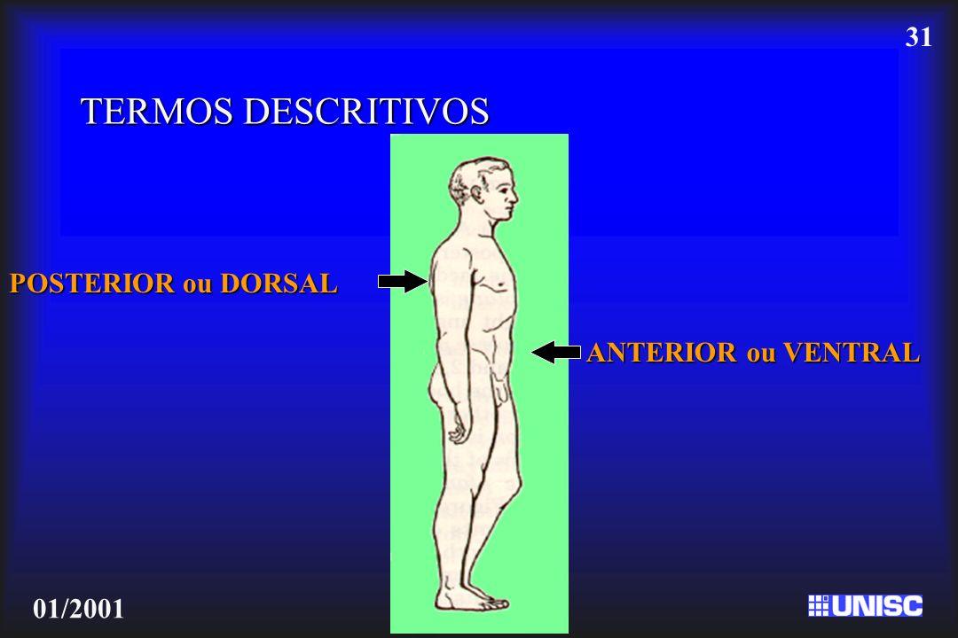 31 01/2001 TERMOS DESCRITIVOS ANTERIOR ou VENTRAL POSTERIOR ou DORSAL