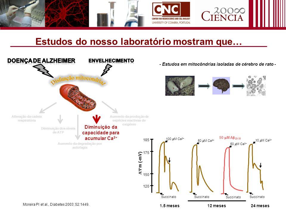 Alteração da cadeia respiratória Diminuição da capacidade para acumular Ca 2+ Aumento da produção de espécies reactivas de oxigénio Aumento da degrada
