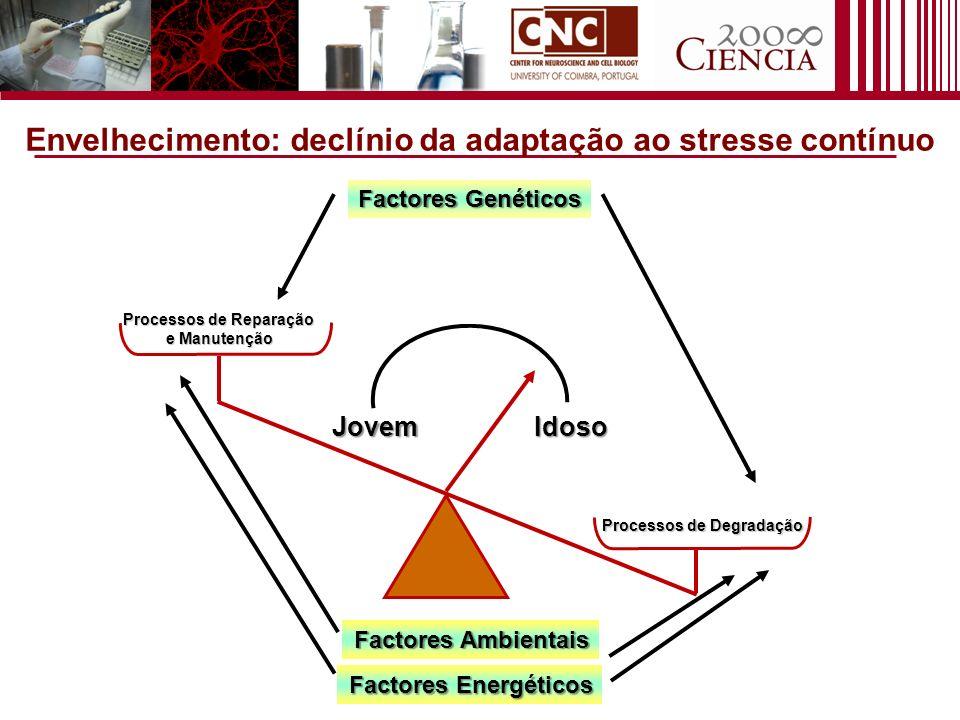 Factores Genéticos Processos de Degradação Processos de Reparação e Manutenção JovemIdoso Factores Ambientais Factores Energéticos Envelhecimento: dec
