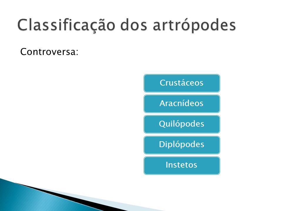 Controversa: CrustáceosAracnídeosQuilópodesDiplópodesInstetos