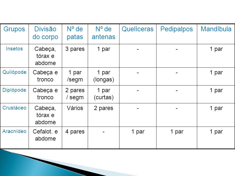 GruposDivisão do corpo Nº de patas Nº de antenas QuelícerasPedipalposMandíbula Insetos Cabeça, tórax e abdome 3 pares1 par-- Quilópode Cabeça e tronco
