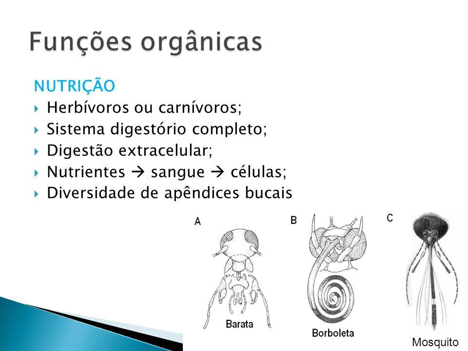 NUTRIÇÃO Herbívoros ou carnívoros; Sistema digestório completo; Digestão extracelular; Nutrientes sangue células; Diversidade de apêndices bucais Mosq