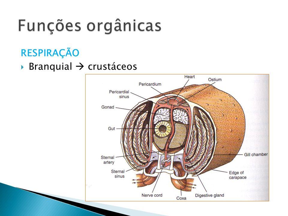 RESPIRAÇÃO Branquial crustáceos Funções orgânicas