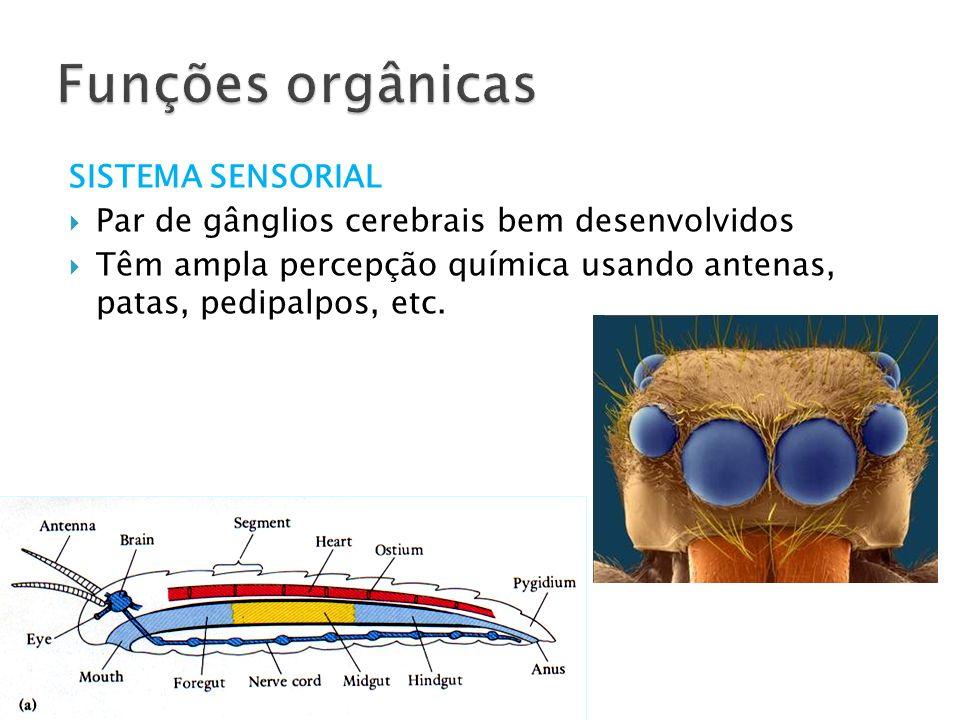 SISTEMA SENSORIAL Par de gânglios cerebrais bem desenvolvidos Têm ampla percepção química usando antenas, patas, pedipalpos, etc.
