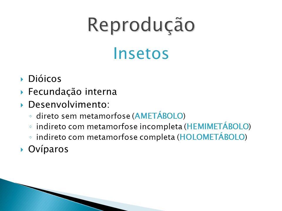 Reprodução Insetos Dióicos Fecundação interna Desenvolvimento: direto sem metamorfose (AMETÁBOLO) indireto com metamorfose incompleta (HEMIMETÁBOLO) i