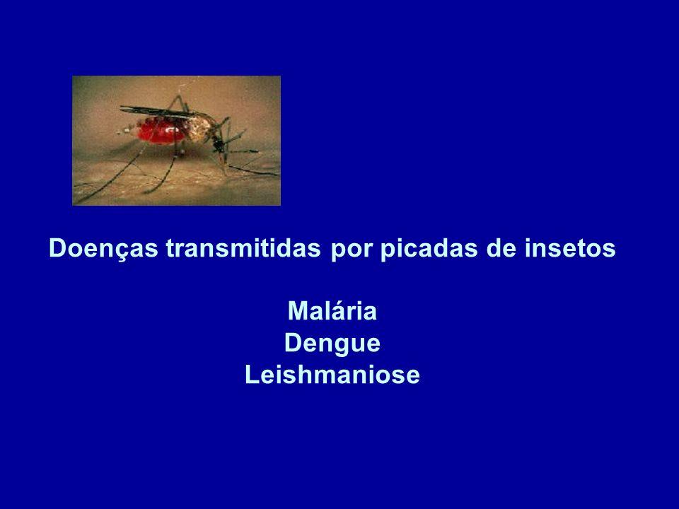 Doenças transmitidas por picadas de insetos Malária Dengue Leishmaniose