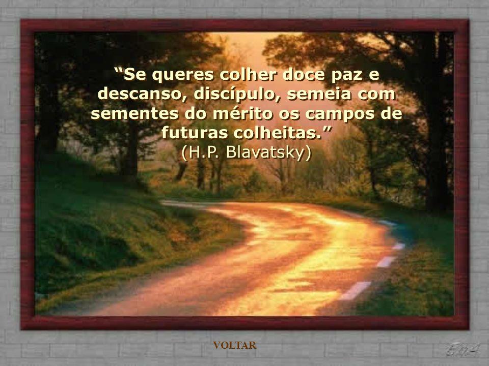 Não existe um caminho para a felicidade. A felicidade é o caminho. (Mahatma Gandhi) VOLTAR