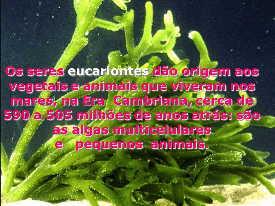 Os seres eucariontes dão origem aos vegetais e animais que viveram nos mares, na Era Cambriana, cerca de 590 a 505 milhões de anos atrás: são as algas
