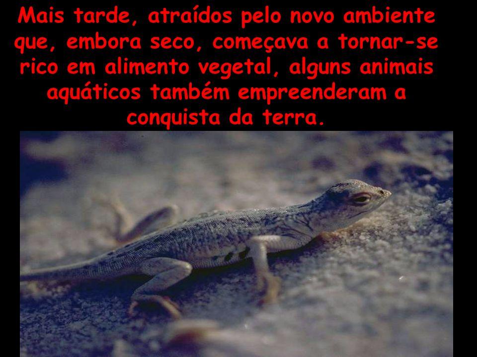 Mais tarde, atraídos pelo novo ambiente que, embora seco, começava a tornar-se rico em alimento vegetal, alguns animais aquáticos também empreenderam