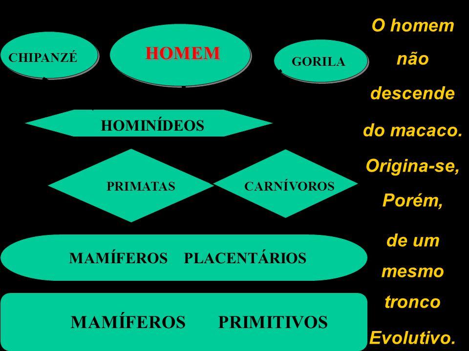 O homem não descende do macaco. Origina-se, Porém, de um mesmo tronco Evolutivo. MAMÍFEROS PRIMITIVOS MAMÍFEROS PLACENTÁRIOS PRIMATASCARNÍVOROS HOMINÍ