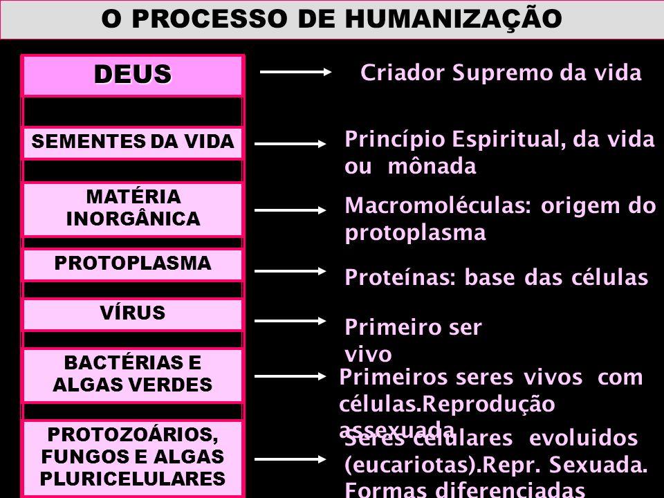O PROCESSO DE HUMANIZAÇÃO DEUS SEMENTES DA VIDA MATÉRIA INORGÂNICA PROTOPLASMA VÍRUS BACTÉRIAS E ALGAS VERDES PROTOZOÁRIOS, FUNGOS E ALGAS PLURICELULA